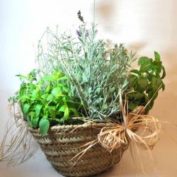 Cesta de planta Aromatica y plantas culinarias, bcn