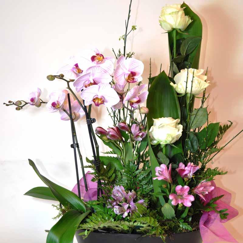 Centro Orquideas y flor