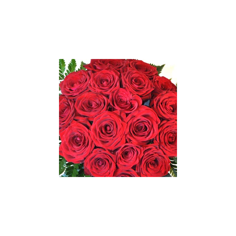 15 big Red Roses