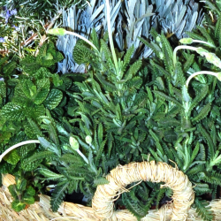 Cesta plantas Aromáticas en floracion