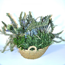 Aromatic basket plants deliver to Barcelona